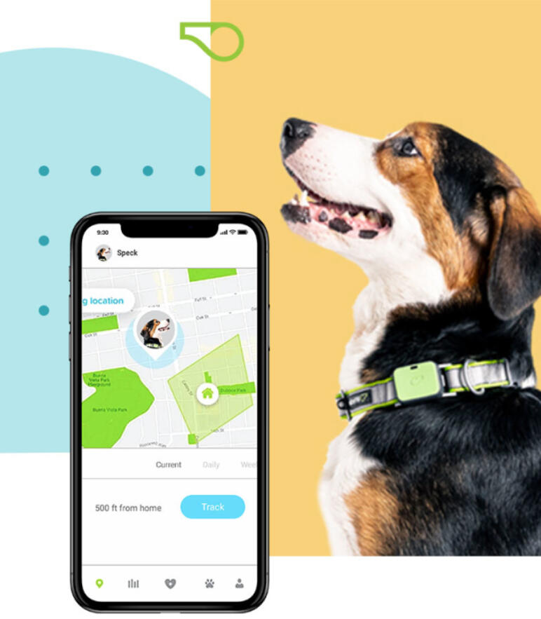 Kindship Whistle Pet Care Innovation MMR Research